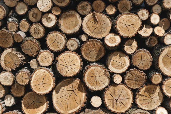 Holzfachbegriffe einfach erklärt - Kernholz