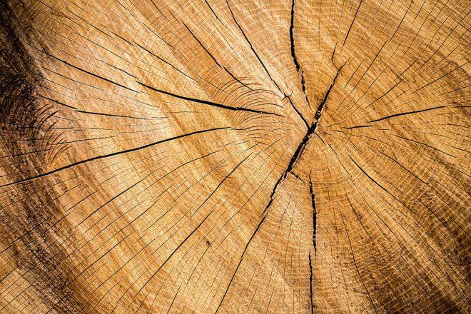 Wir erklären Holzfachbegriffe verständlich: Splintholz